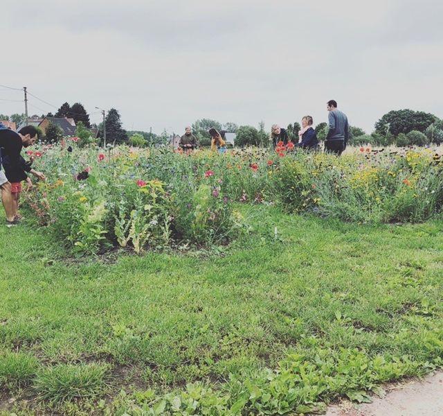 plukweide tuincentrum braeckman