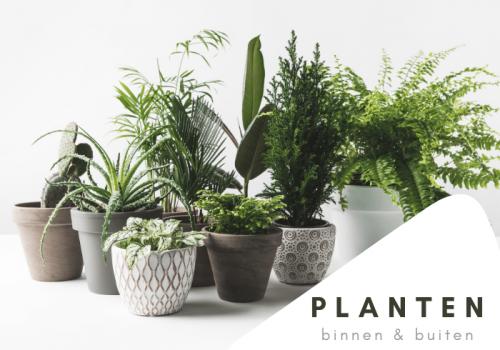 PlantenKnop